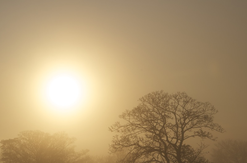 Sunrise on a misty winter's morning in Sheffield
